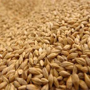 Bran (Corn, Wheat, Rice, Oat)