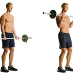 Barbell Biceps Curls